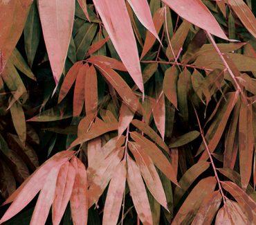 Bamboo pink tapetas